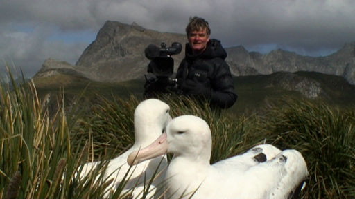 Albatrosses – mates for life