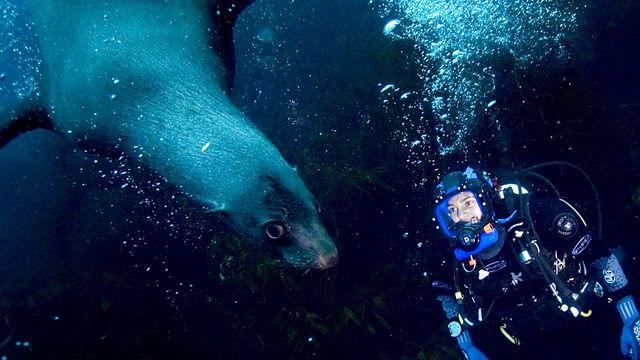 Oceans: Southern Ocean