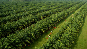 Episode image for Palm Oil