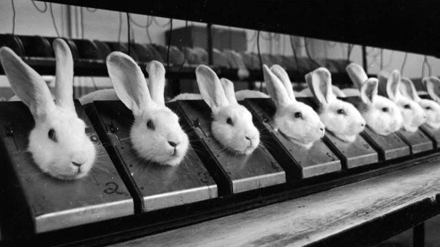 One Voice lance un nouveau label pour les produits non-testés sur les animaux