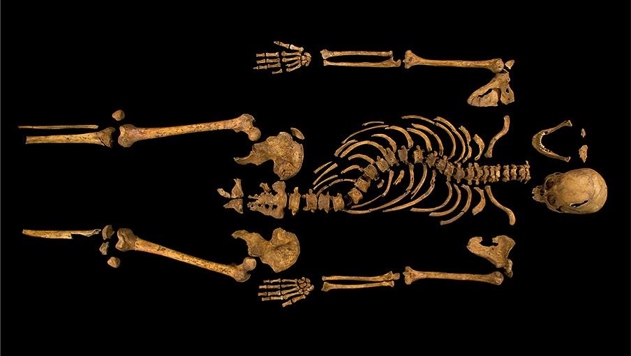Skeleton laid out horizontally