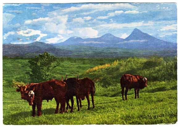pentathol postcard from Rwanda #1, front