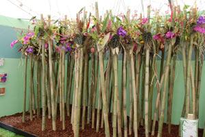bamboo_wales_arrangement.jpg