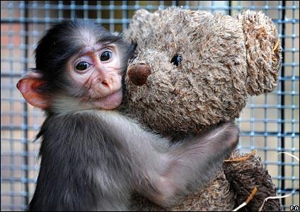 monkey424pa.jpg