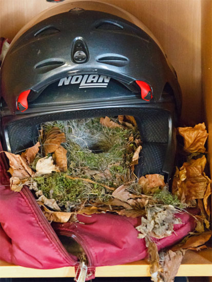 Nest in helmet by Mike Cooter