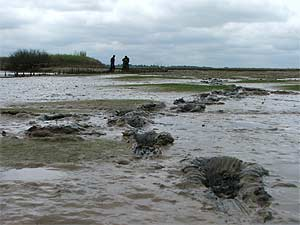 external image essex_mud.jpg