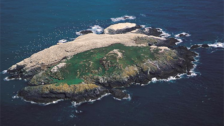 Aerial view of the gannetry at the RSPB Grassholm nature reserve. Image by John Archer-Thompson, RSPB Images.
