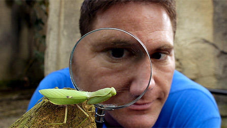 Presenter steve backshall studies a preying mantis