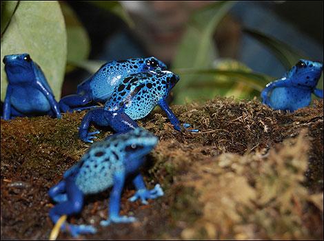 Volim plavo - Page 6 Blue_470x350