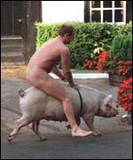 pig-riding-150.jpg