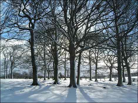 external image winter_trees_470x353.jpg