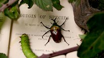 Crawling beetle