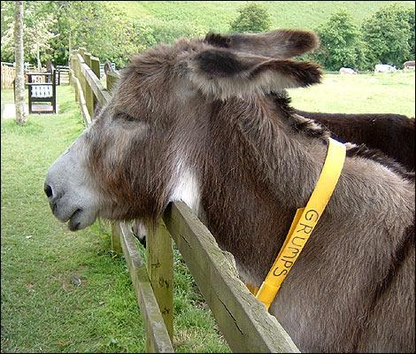 10 donkey sanctuary grumps 470x400