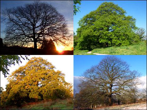 jg_tree_seasons_468x352.jpg