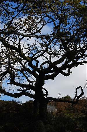 tree silhouette clip art. +tree+silhouette+clip+art