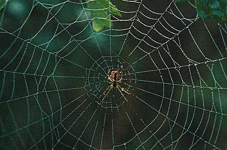 Verbindungen zum Satanismus - eine kleine Übersicht Spiders_web_william_white_470