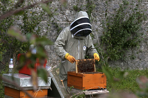 beekeeper looking at hive (Credit: BBC)