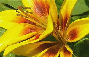 BBC - Gardening - Gardening Guides - Techniques - Planting summer ...