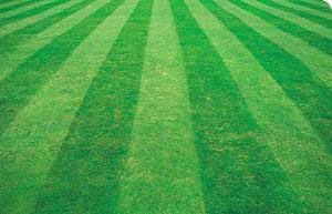 lawn_improving.jpg