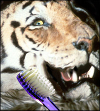 A happy tiger showing off his toothbrush.