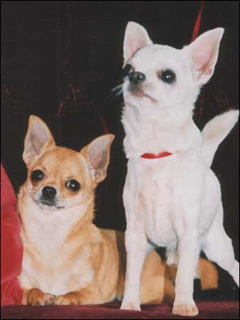 http://www.bbc.co.uk/herefordandworcester/content/images/2006/03/01/stolen_dogs_victoria_frosty_338x450.jpg