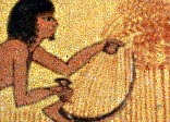 Detail from a New Kingdom tomb painting, showing the harvest being gathered.