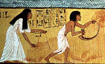 6C Ancient Egypt / Economy Team 1