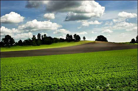 http://www.bbc.co.uk/kent/content/images/2008/05/14/farmers_field_hawe_470x311.jpg