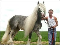 Gyspy Horse