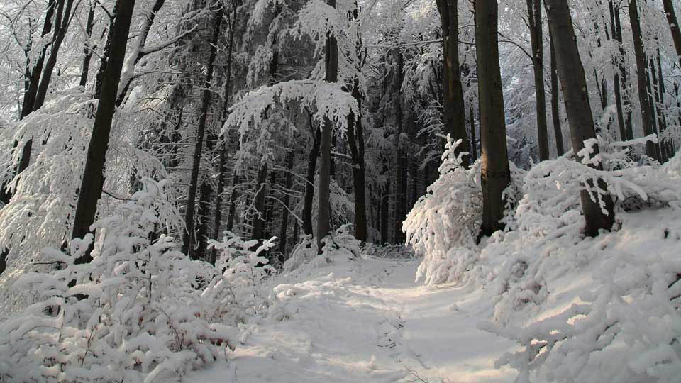 BBC School Radio: Something to Think About - The snow is coming