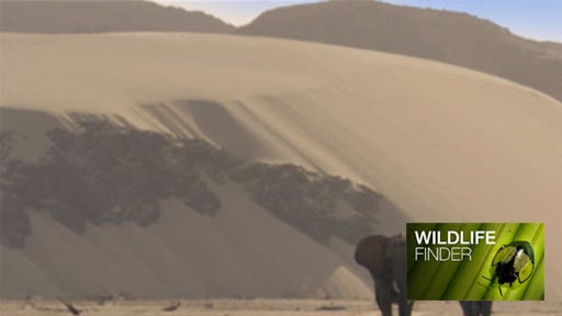 Elephants in the Namib Desert