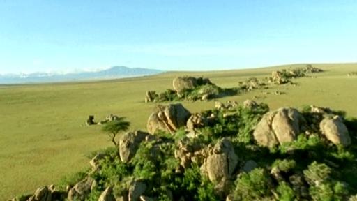 grassland biome animals. Images of a savannah iome (no
