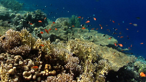 The impact of global warming on coral reefs