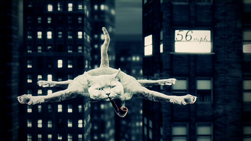 Terminal velocity - why do cats have nine lives?