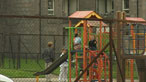 Preventing children becoming young offenders