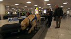 Frontline defence at the airport - meet the food fighter sniffer dog