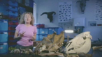 What can an archaeologist learn from animal teeth?