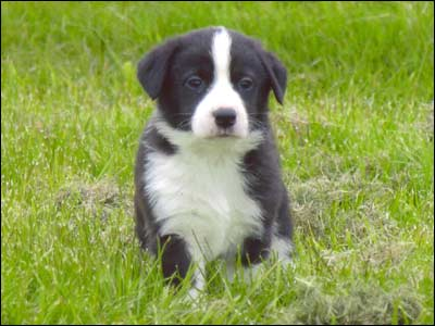 puppy1_400x300.jpg