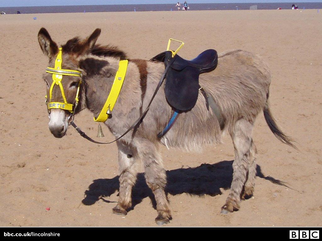 skeggy donkey 1024