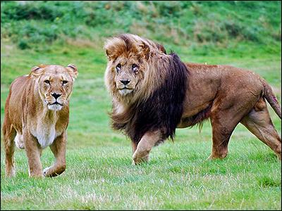 woburn_lions400_400x300.jpg