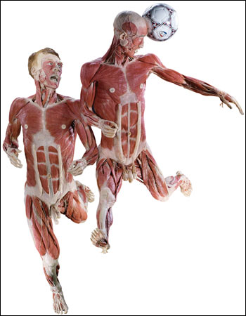 http://www.bbc.co.uk/manchester/content/images/2008/01/18/bodyworlds_football_01_350x450.jpg