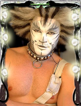 cats makeup. BBC Norfolk - Cats make-up