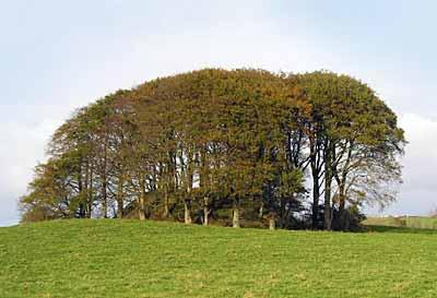 Dundermot Mound near Ballymena