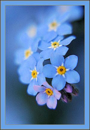 цветы и деревья из бисера инструкция бесплатно.