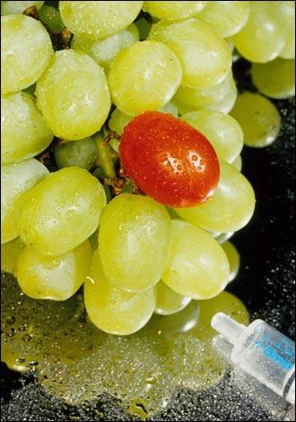 genetically_modified_grape_330x470.jpg