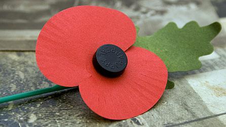 Image Result For Veterans Day Poppy