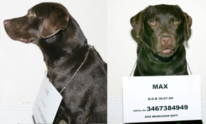 Dog Borstal Tv Show