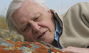 A Life In Cold Blood: Sir David Attenborough and a sideblotched lizard (uta stansburiana)