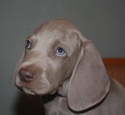 Las 68 razas de perros más lindas del mundo