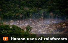 Watch 'Human uses of rainforests' video